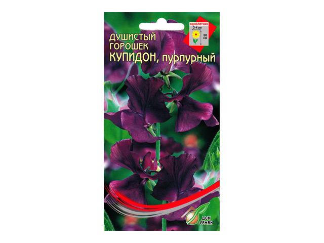 семена горошек душистый купидон , пурпурный 6шт