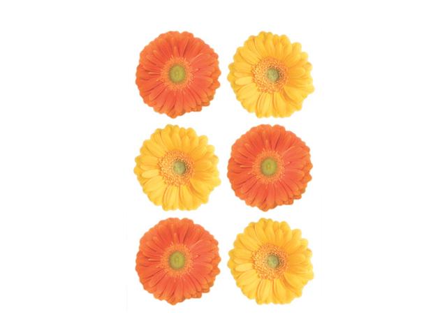 наклейка ДЕКОРЕТТО Герберы жёлто-оранжевые 25х35 наклейка декоретто чёрные котики 25х35