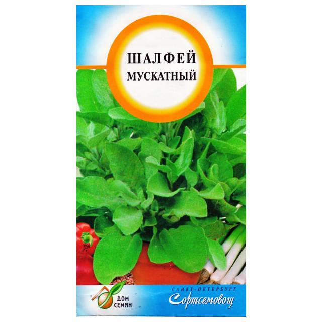 семена шалфея мускатный Вознесенский 65шт