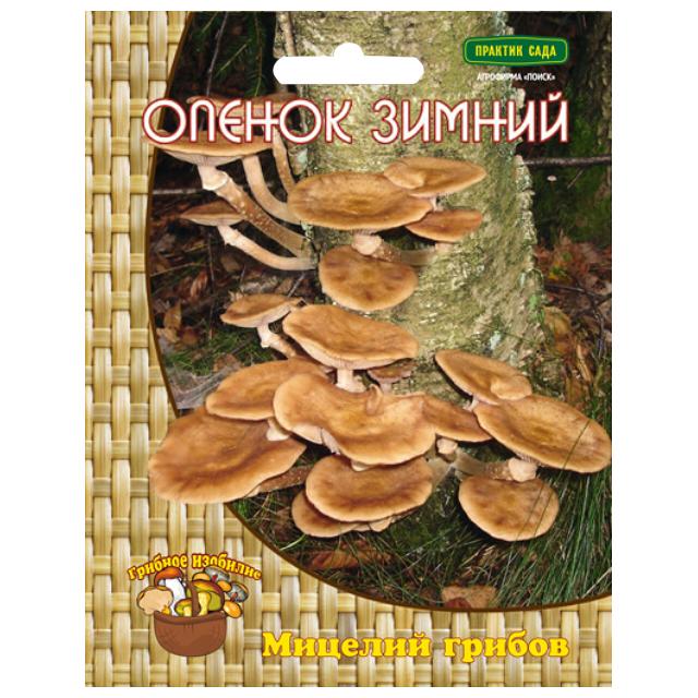 мицелий грибов Опенок зимний 12 др.п. цена 2017